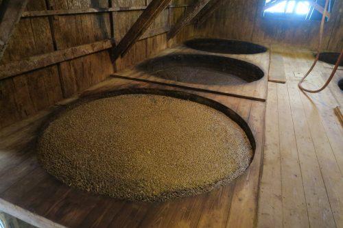 Soy beans fermenting into soy sauce at Sakae Shoyu Jozo