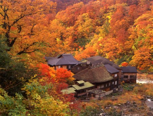 Autumn colors at Kuroyu Onsen in Akita