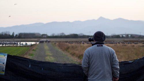 Watching the migratory cranes in Izumi, Kyushu.