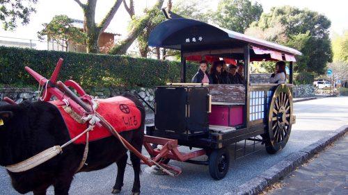 Riding an ox-drawn cart in Izumi, Kagoshima.