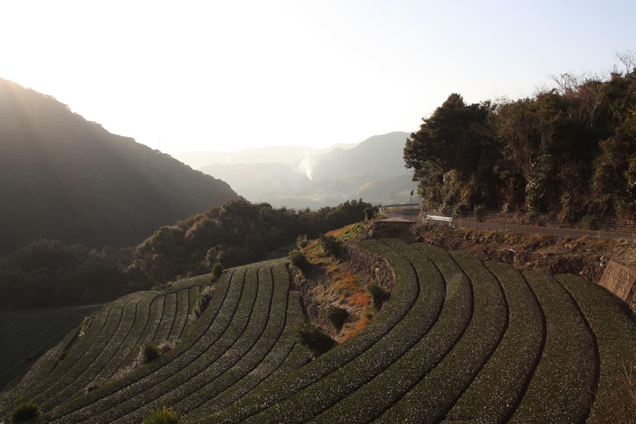 Discovering Green Tea Tourism in Higashisonogi