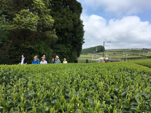 Green tea tourism in Nagasaki