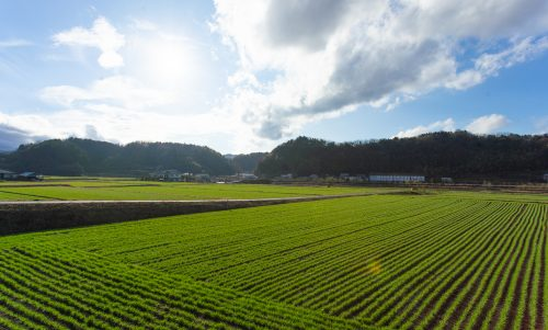 The farmland of the Ogata Plains in Bungoono, Oita, Kyushu, Japan.