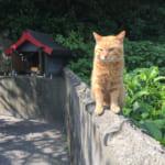 Oita's Magical Islands of Cats and Seashells