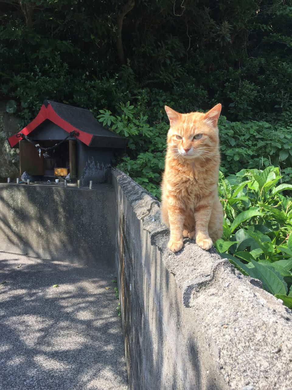 Oita's Magical Islands of Cats and Seashells
