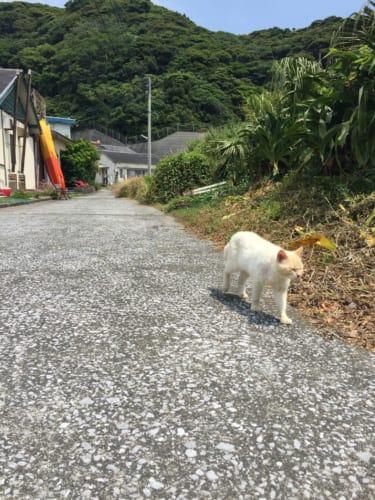 Cat walking in Fukashima village