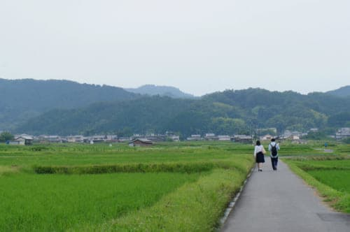 Two people walking on a small road in the middle of the rice fields in Asuka, Nara