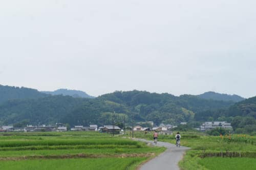 Two people cycling through the rice fields in Asuka village, Nara prefecture