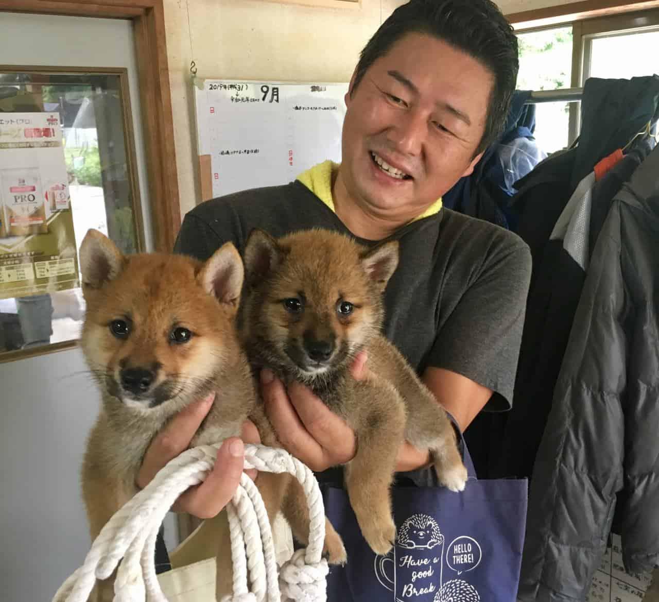 Shiba Inu Japan S Cutest National Treasure