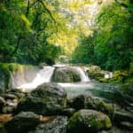 The Rejuvenating Forest of Kikuchi Gorge
