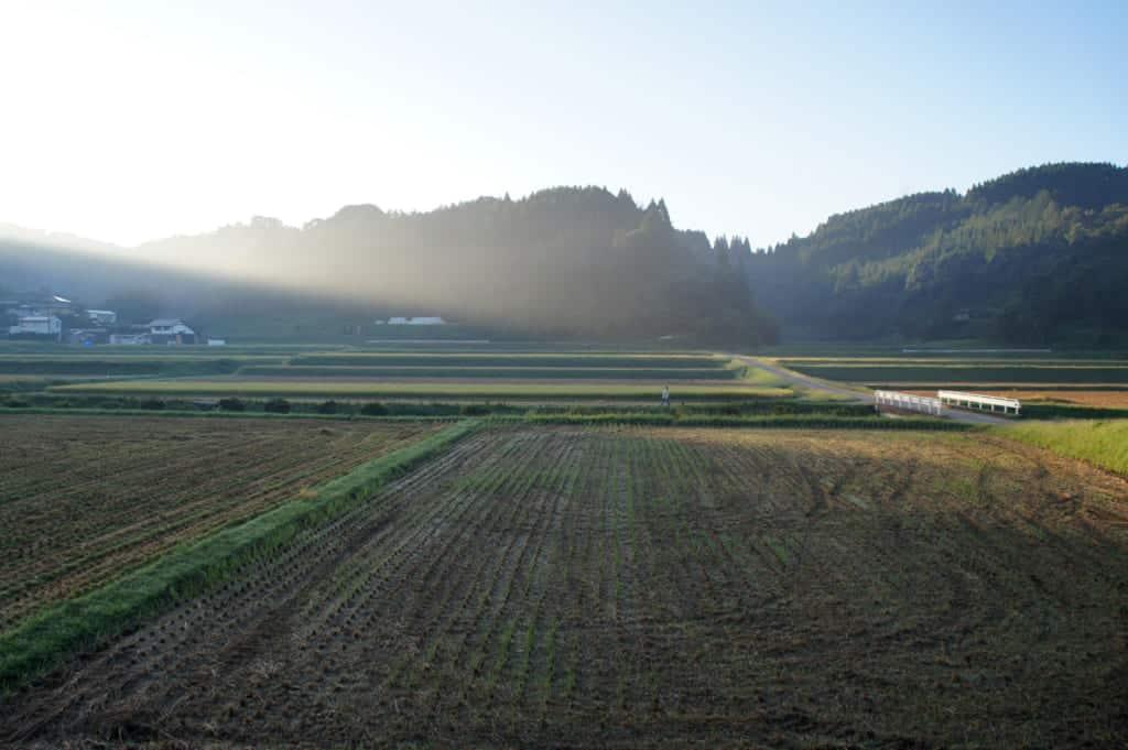 Kikuchi rice fields in early morning light