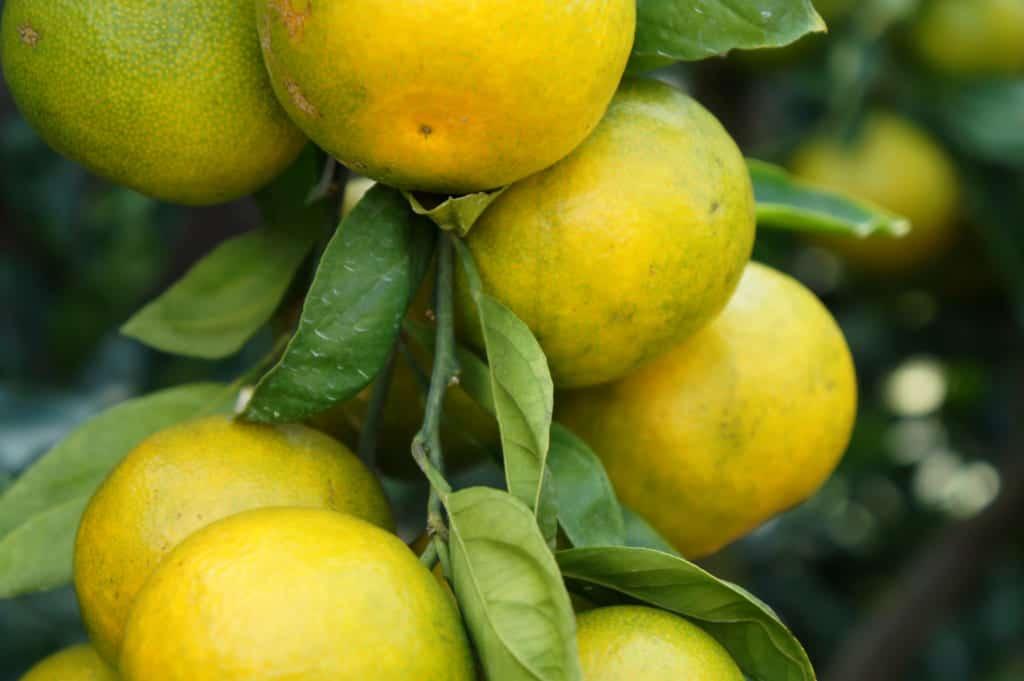 Close-up on citrus fruits