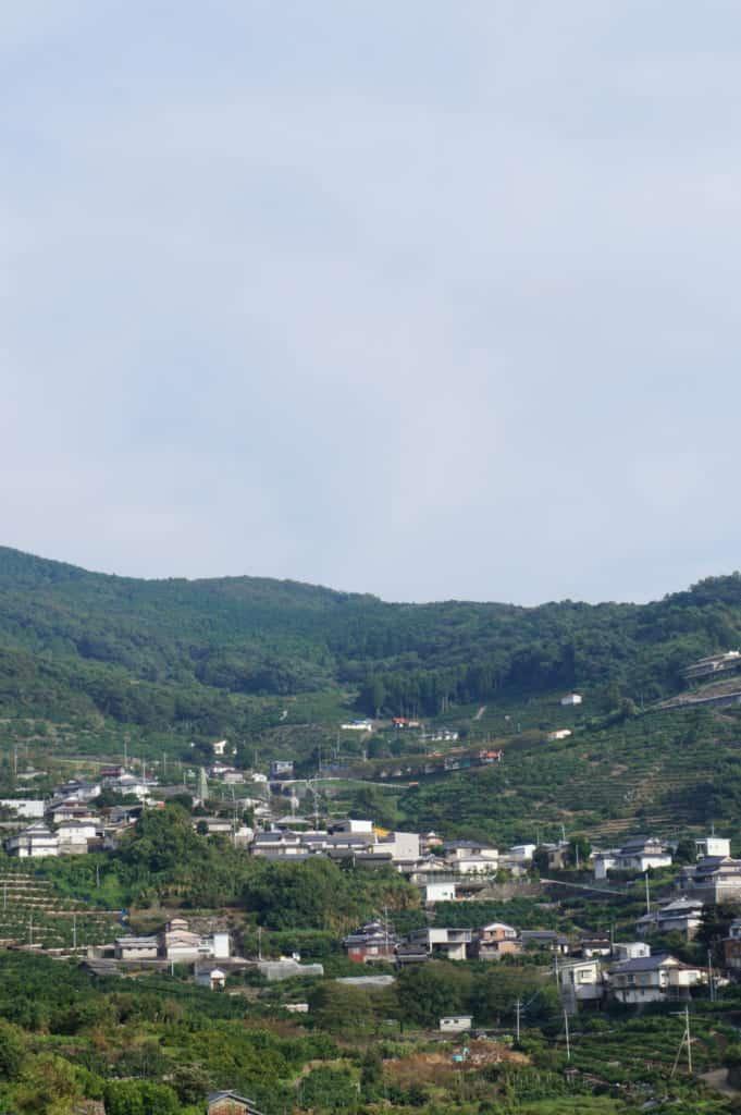 The citrus-planted landscape, seen from Kusamakura onsen Tensui