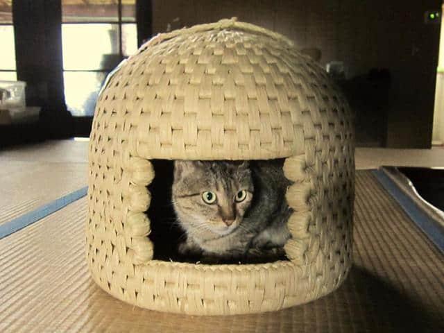 """Sekikawa's Neko-chigura """"Cat Houses"""" Sustain Tradition and Cats Alike"""
