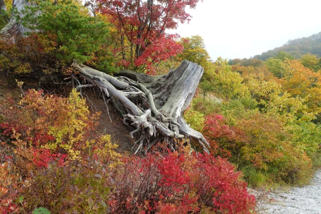 The beautiful colours of Japanese autumn in Akita Prefecture