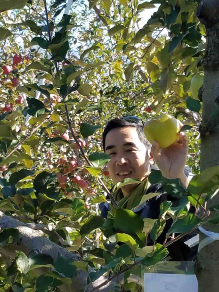 Picking apples in Iiyama, Nagano