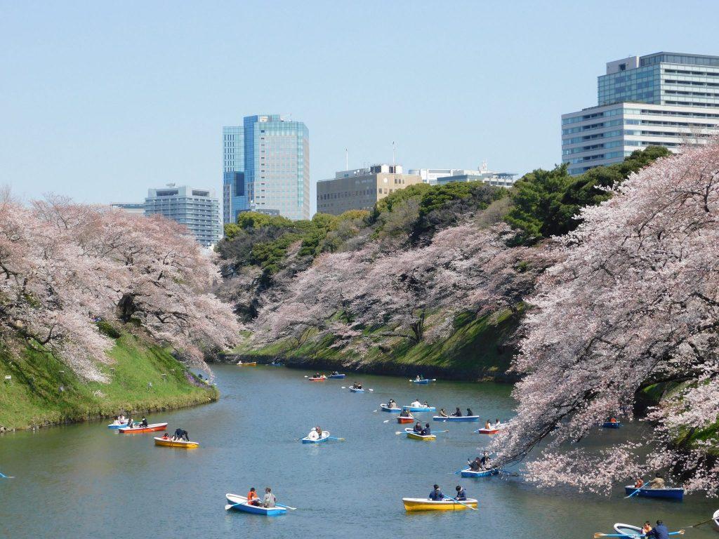 sakura cherry blossoms and hanami along river in tokyo, japan