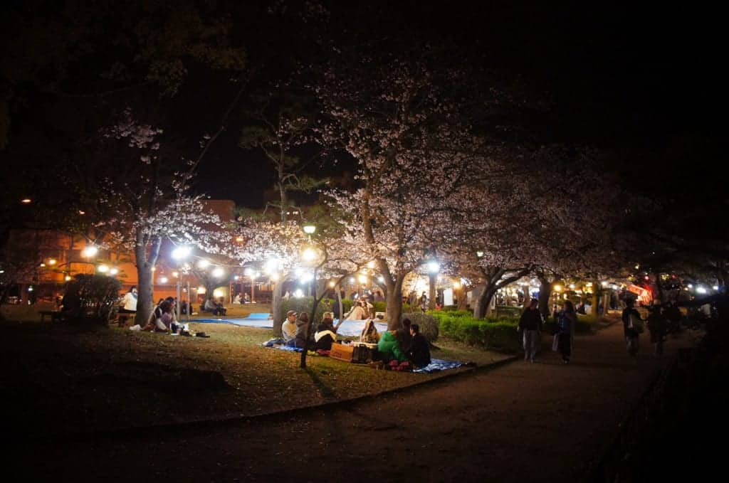 nighttime hanami viewing party in Japan