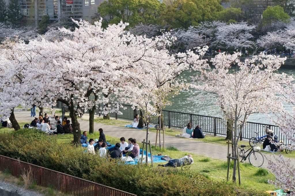 hanami sakura viewing party in Japan