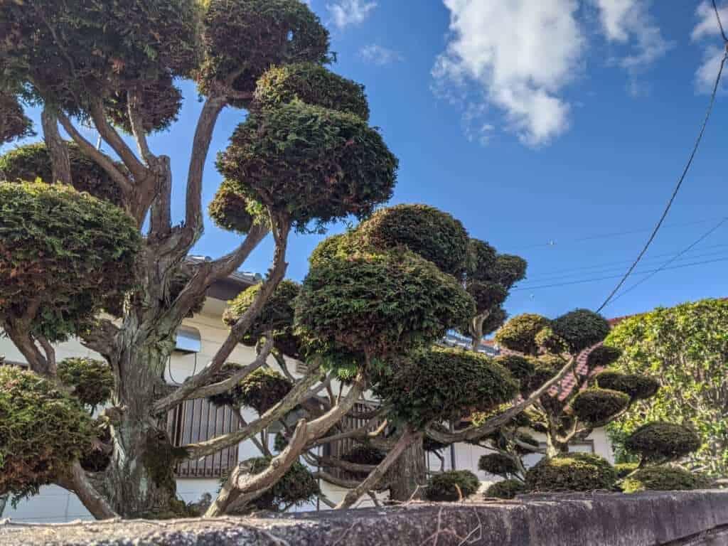 A Garden along Makabe Street, Sakuragawa, Ibaraki