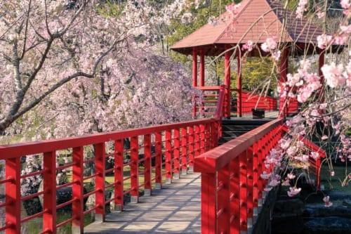 Sakura blossom season at Keiseki Park