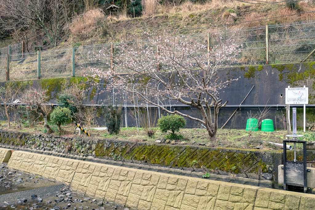 Kurotani Washi Paper village in Kyoto prefecture