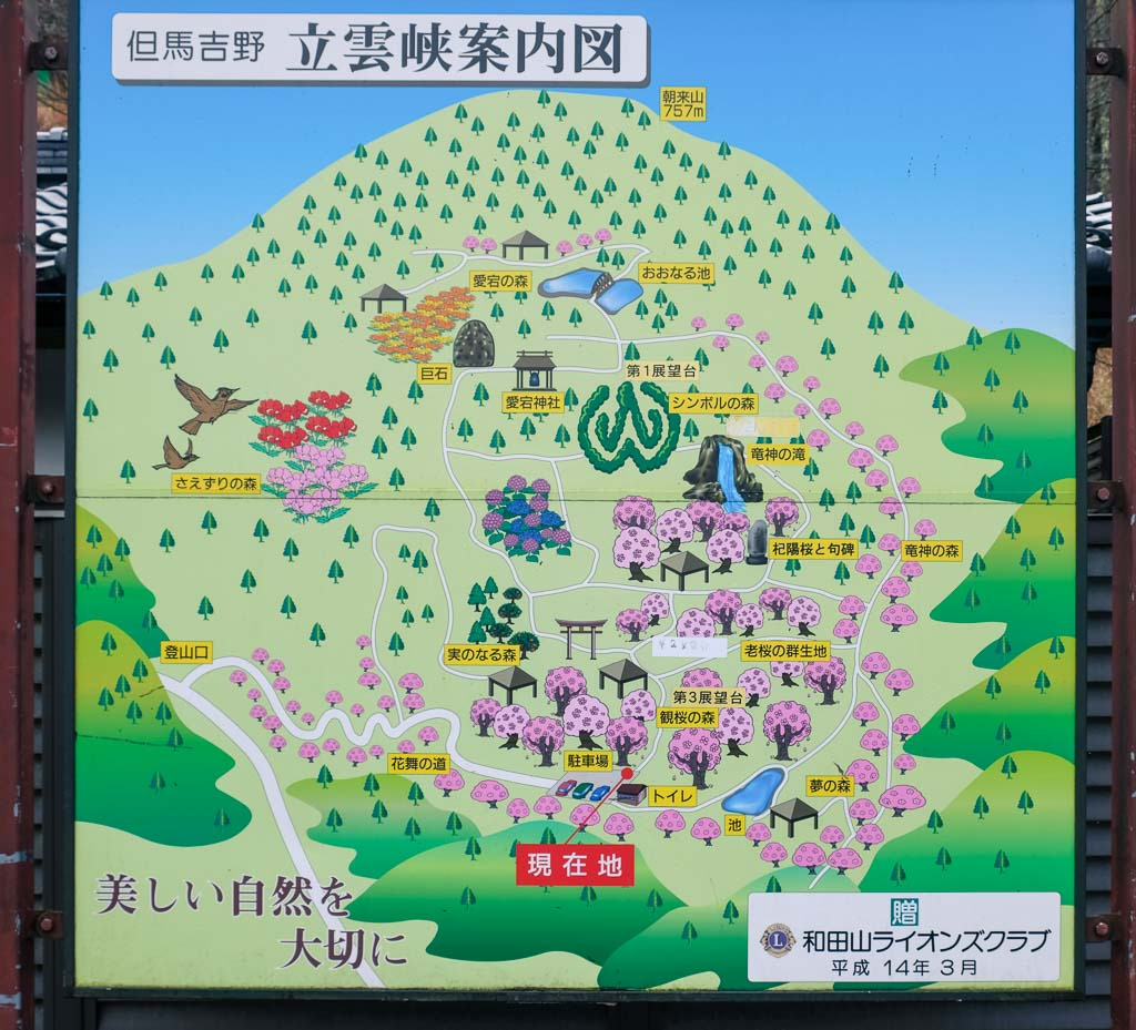 map of cherry blossoms spots at Ritsuun-kyo, Japan's castle in the sky