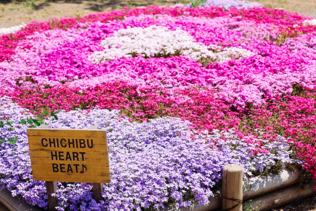 Japanese flower field in Japan