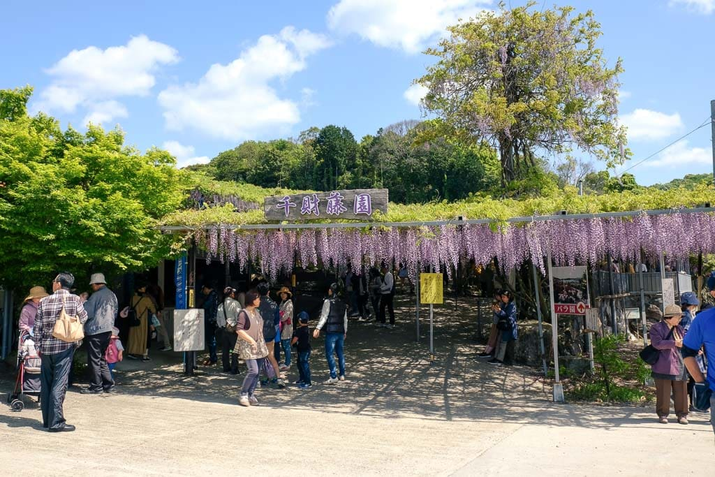 Entrance to Senzai Wisteria Park