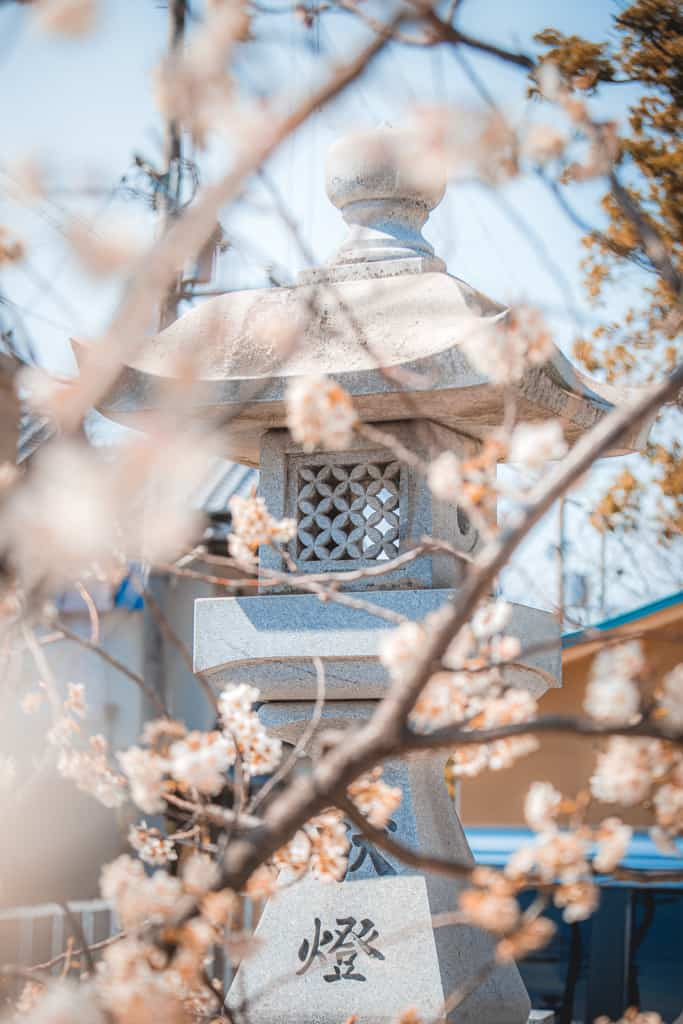 Cherry blossoms and lantern. Nunose shrine, Osaka