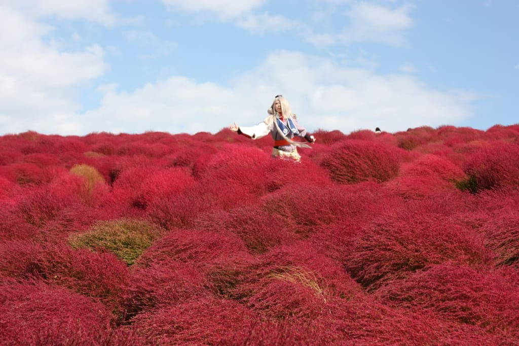 Cosplay in the red kochia hills