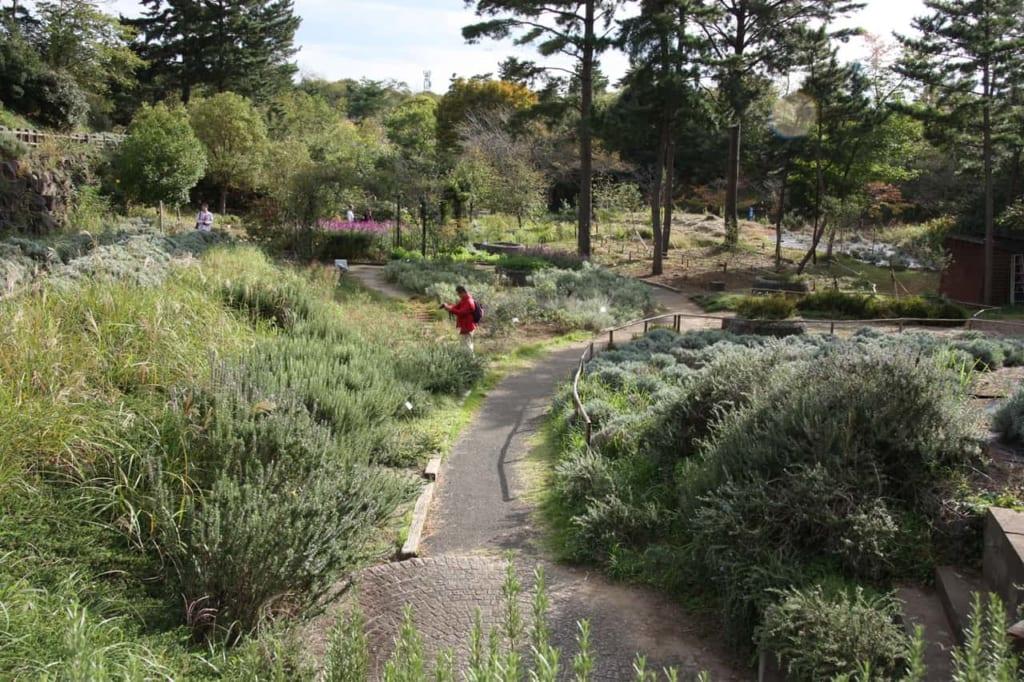 Quiet path in Hitachi Seaside Park