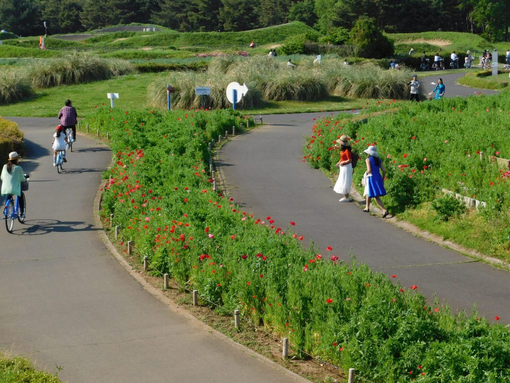 Bicycle way at Hitachi Seaside Park.