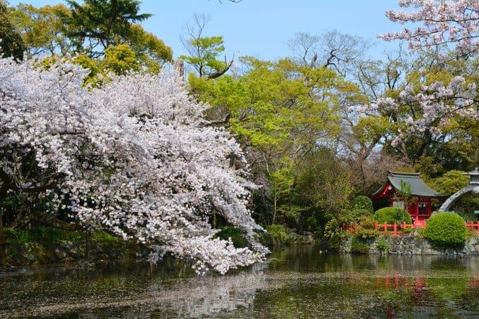 Mishima Taisha in Spring