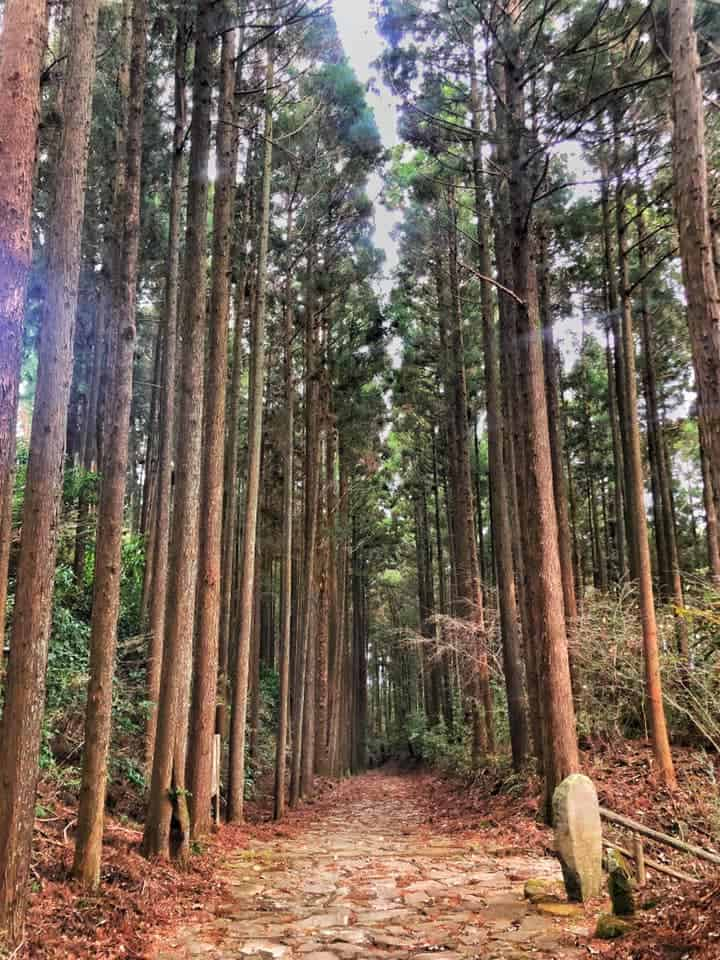 The 400 year old sugi (Japanese cedar trees) along Hakone Hachiri