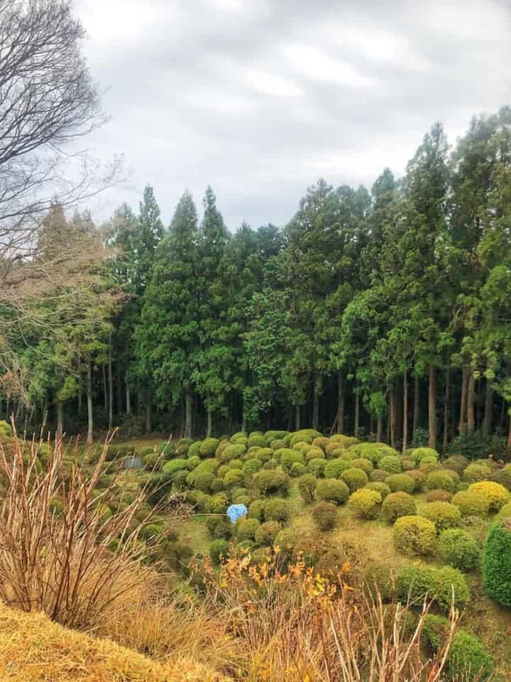Surrounding foliage of Yamanaka castle along Hakone Hachiri on the Tokaido Road