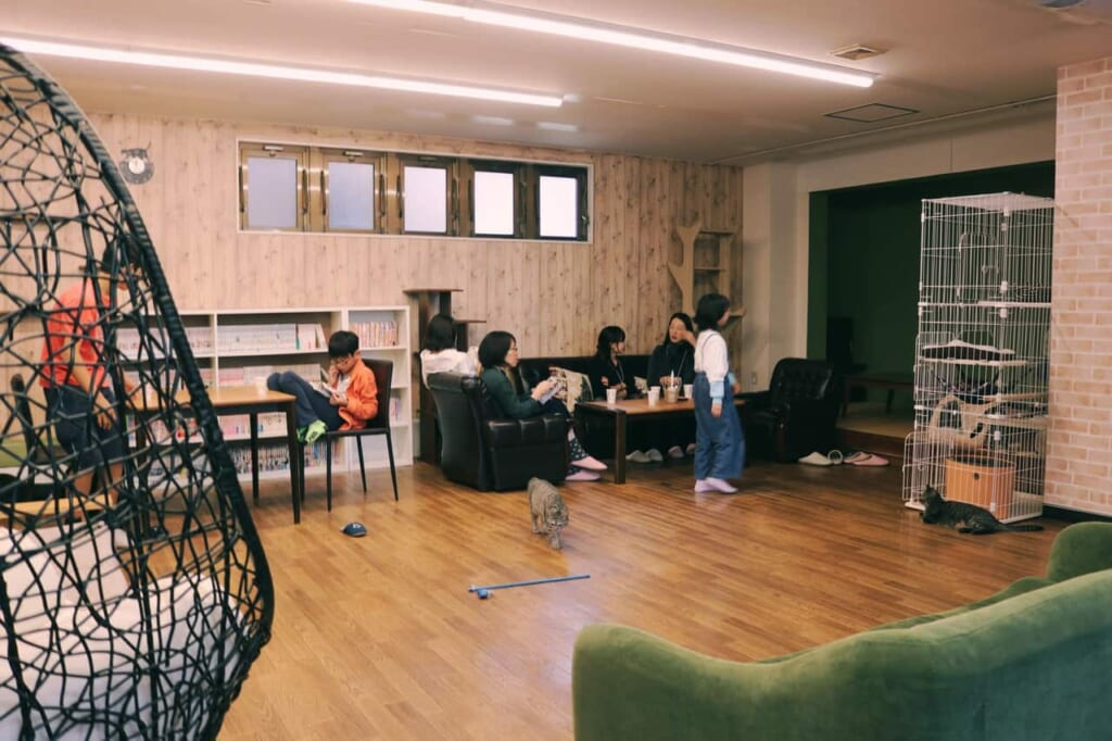 The general view of the cat café