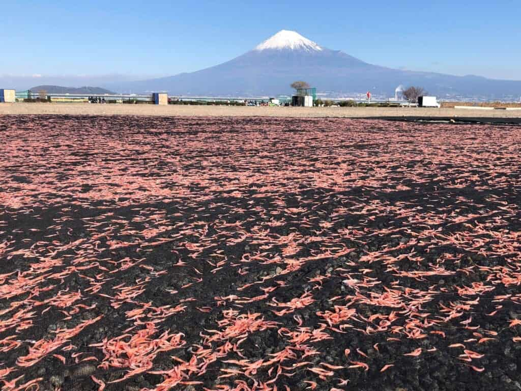The infamous suruga bay shrimp and Mount Fuji