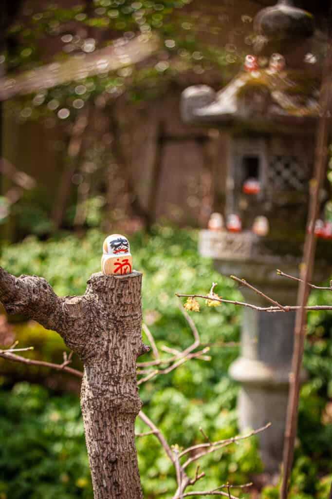 little daruma on a tree trunk