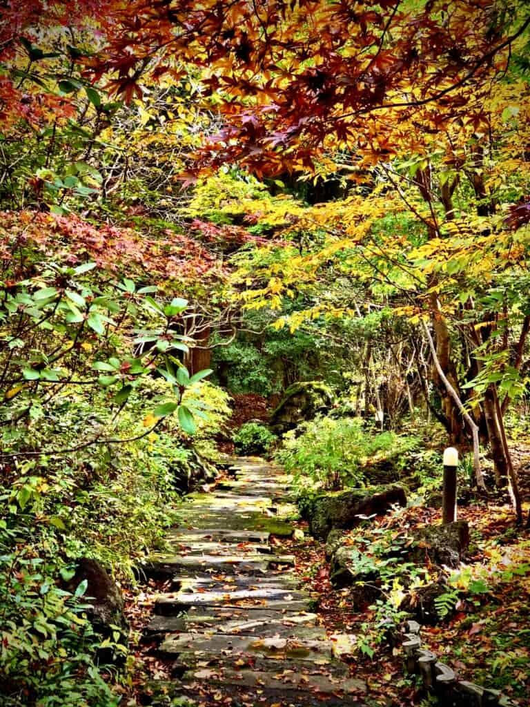 Sennomori foliage forest in kyushu