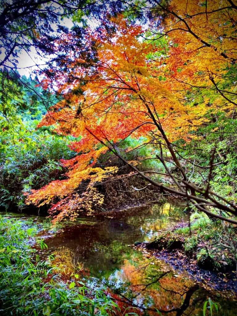 Aso Sennomori autum foliage in kumamoto, japan