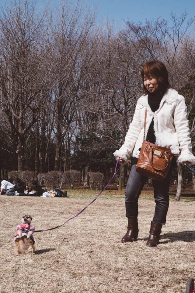 Woman walking with her pet meerkat in Japan