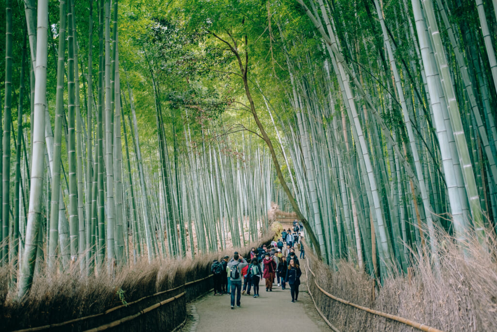 View of Kyoto's Arashiyama bamboo grove