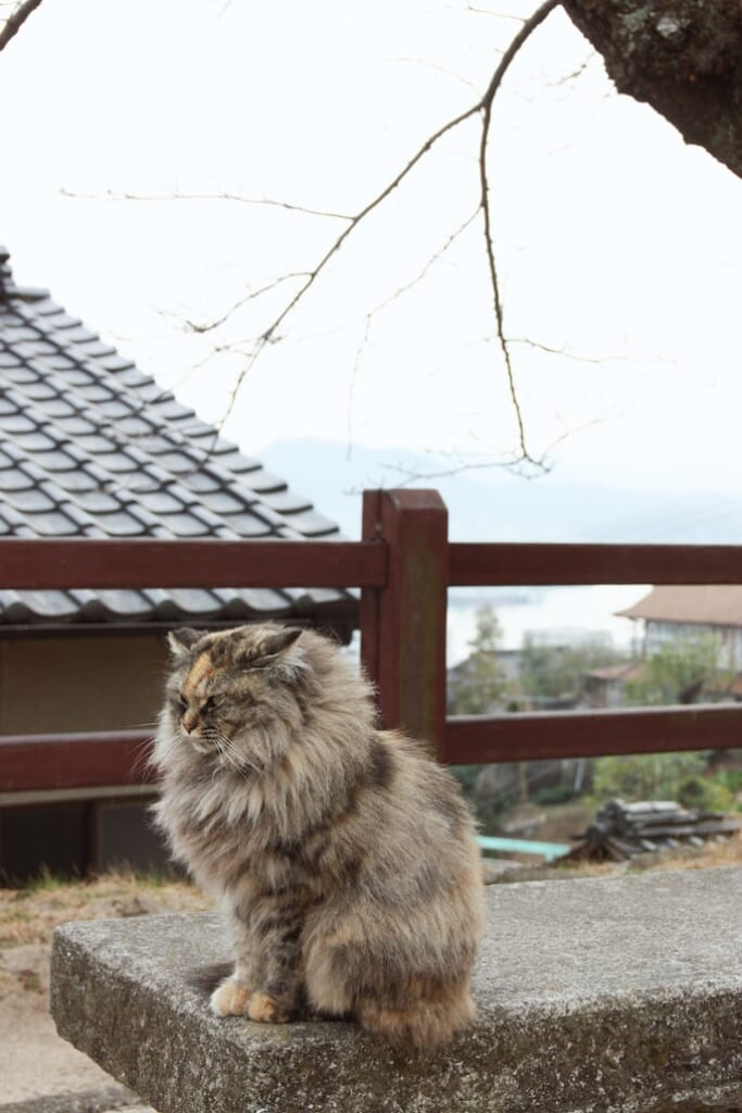 A cat sits on a bench in Onomichi