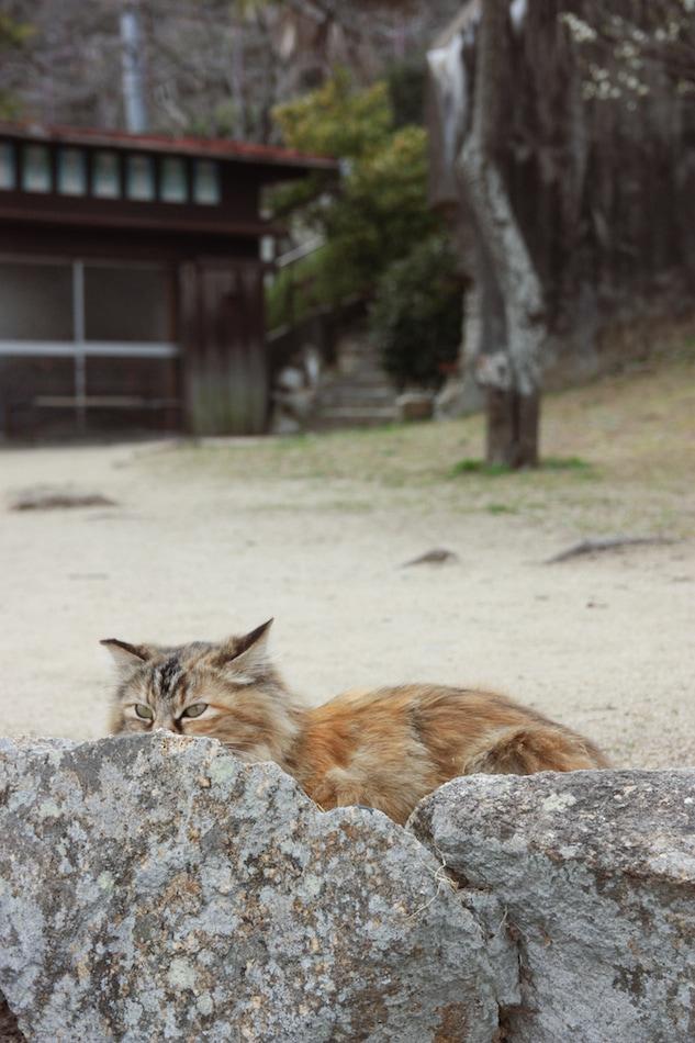 A cat hides behind rocks