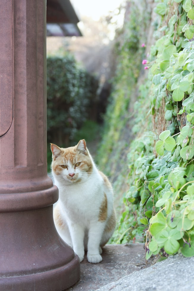 A cat watches as visitors pass along a street in Onomichi