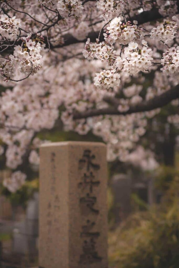Japanese grave with some sakura