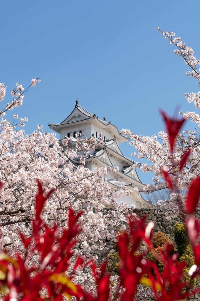 Himeji castle with the marvelous sakura, surronded by a legend where it says a yurei lives around there