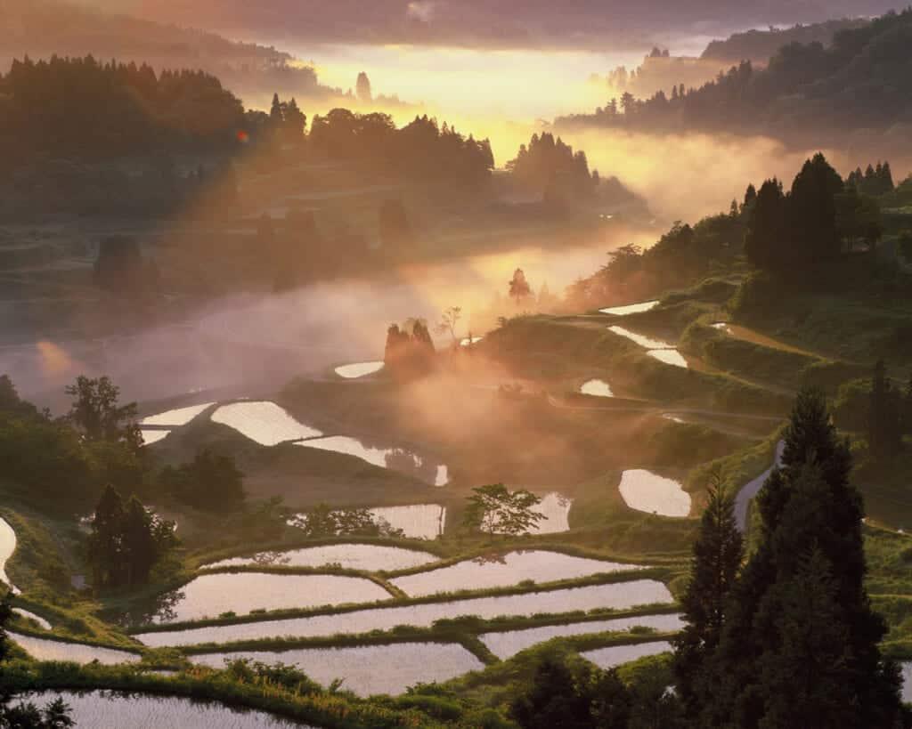 houshitouge rice field japan