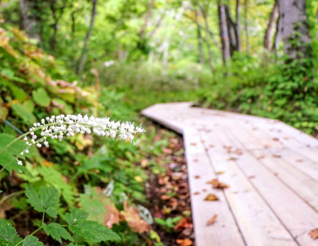 Wood pathway at Himenuma Pond on Rishiri Island, Hokkaido